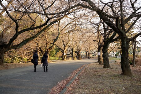 ウォーキングコース パワースポットと観桜
