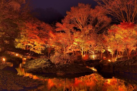 One of the largest morning food markets in Sagami Bayand the lighting up of Japanese maple trees