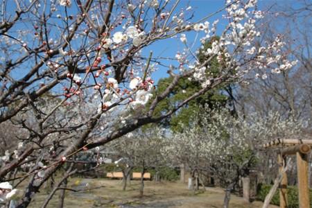 Wakamiya Park Pflaumenblüten Garten und Nanasawa Onsen