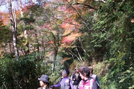 Hiking course with rich nature, the young green leaves of Spring, beautiful red leaves in Autumn