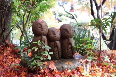 Besichtigung von Herbstblumen in Kamakura mit dem Enoden Zug