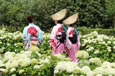 Mit Hortensien gesäumter Uferwanderkurs des Sakawa Flusses