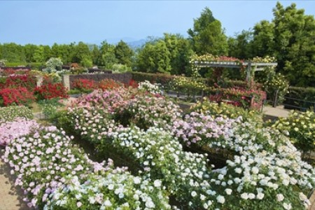 Visit various kinds of flower and vegetable gardens, and take in the views at Shonandaira
