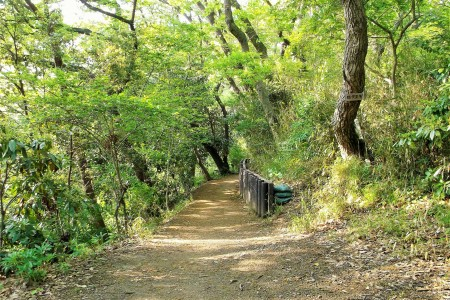 คามาคุระไปยังคะนะสะวะ : เส้นทางเดินป่าเท็น'เอ็นและร็อคโคะคุ-โทะเงะ