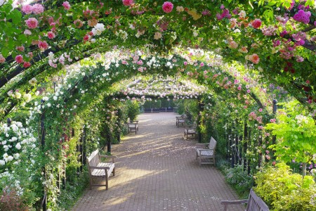 ดอกกุหลาบและดอกไฮเดรนเยีย! การท่องเที่ยวชมดอกไม้ในพื้นที่มหานคร