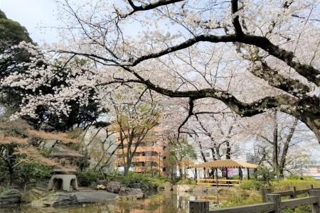 See places famous for their cherry blossoms and stroll around Yokohama's Chinatown.