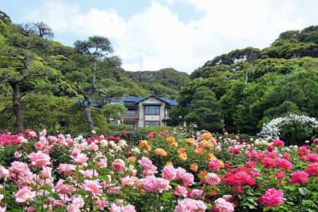 Visit Kamakura Museum of Literature, one of the Three Magnificent Western Houses of Kamakura, and the Great Buddha of Kamakura