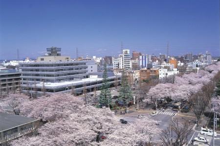 春の相模原で桜めぐり