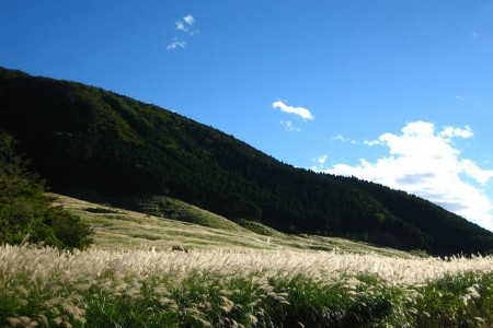 Hiking around highlands through Japanese silver grass