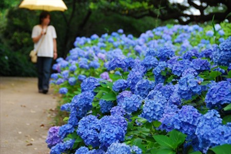 橫須賀~鎌倉周遊路線