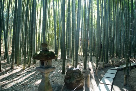 How about a real zazen experience at a temple in the bamboo forest?