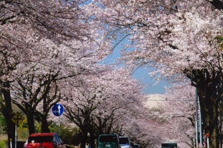 Hadano Course: Visit famous cherry blossom viewing spots and the finest spring waters.