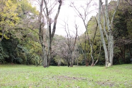 The abundant nature and picturesque scenery of Yokohama (Segami-Kamigo-cho) await you when going forest hiking