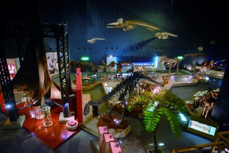 가나가와현립 자연사박물관, 온천·지질연구소 방문