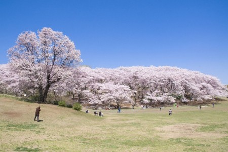横滨市民最爱的休闲场所,在公园的绿意中度过悠闲地一天