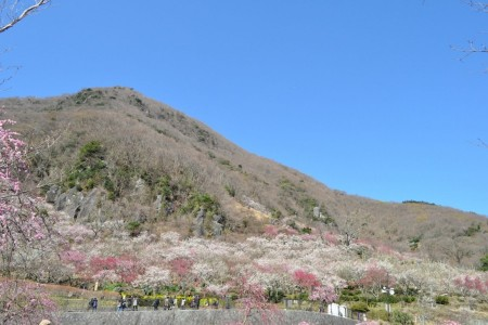 View plum blossoms at Makuyama Park; then visit famous Mitsuishi at the southernmost peak of Manazurucape