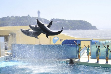 Let's GO family! Fruit picking and a dolphin show at the new Enoshima Aquarium