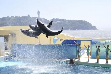 家族でGO!新江ノ島水族館のイルカショーと果物狩り