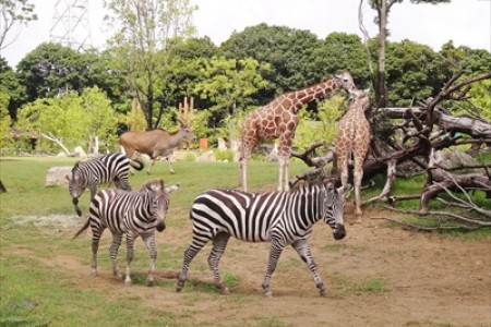 Yokohama Zoorasia Zoo and Nearby Forest Experience (bus or rental car plan)