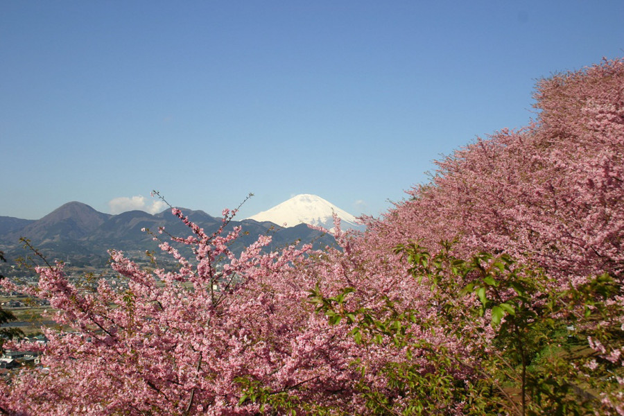 ประเทศญี่ปุ่นท่ามกลางสีสันแห่งฤดูใบไม้ผลิ