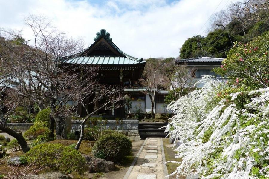 Visitez le temple de la famille Hojo, où fleurit le trèfle blanc.