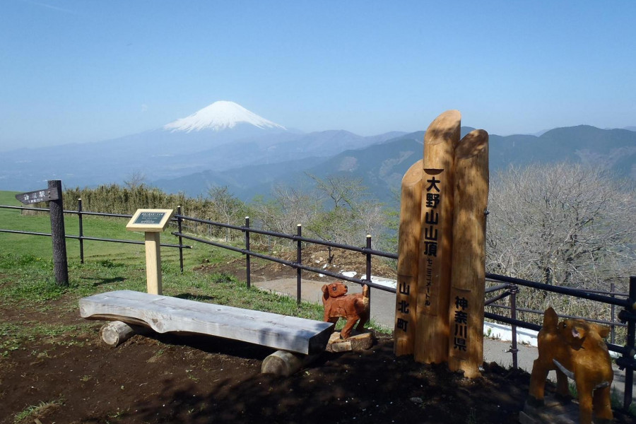 Views of Fuji with Cherry Blossoms on the Mount Ono Hiking Trail
