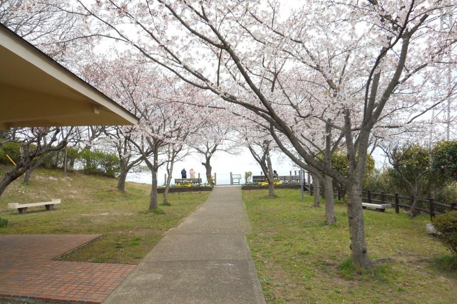 無憂無慮地漫步在橫須賀的公園裡