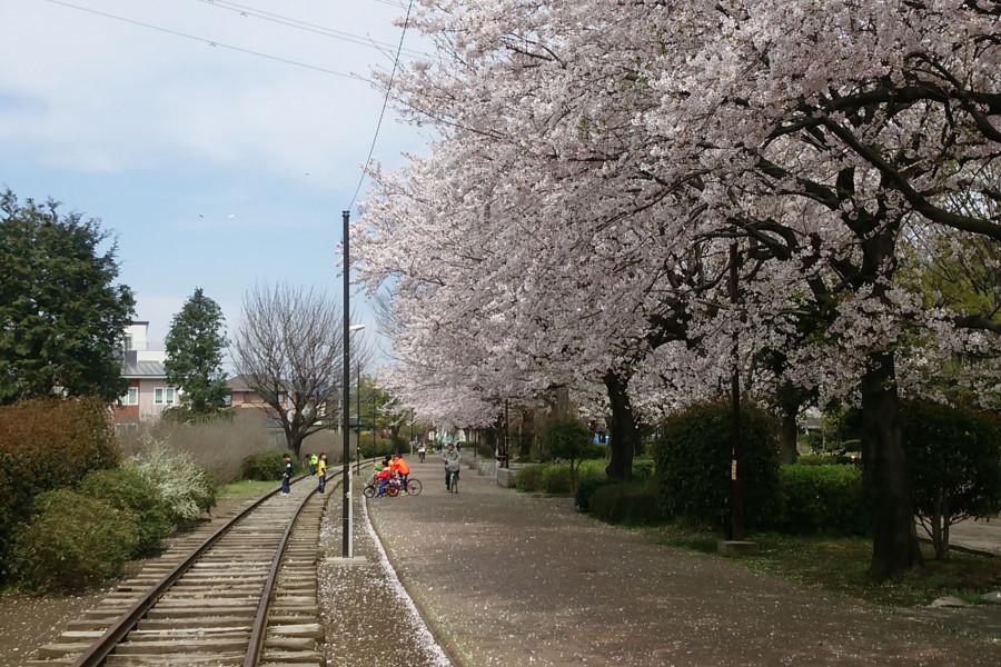 A Stroll Around Samukawa Shrine