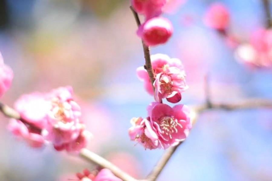 오다와라의 자두나무와 성을 유쾌한 봄 투어