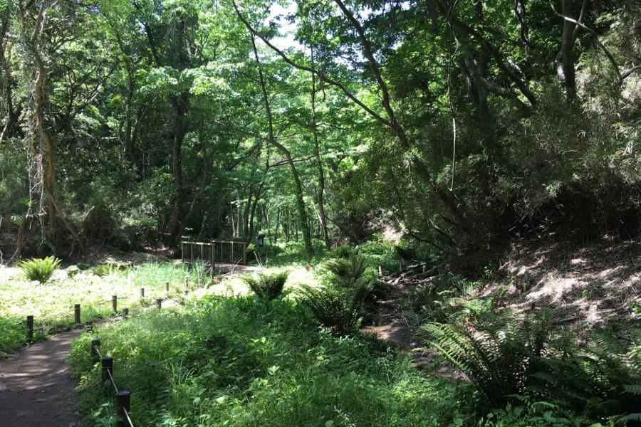 首都圏唯一の生態系を残す小網代の森自然散策と、鎌倉日本文化体験