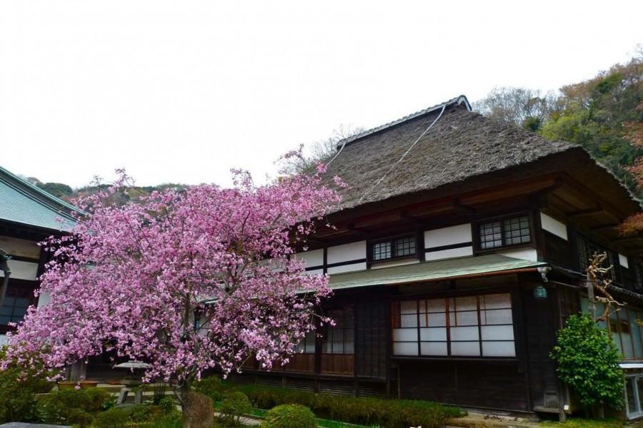 Profitez de la beauté de chque saison à Kamakura avec des images des chemins menant aux temples.