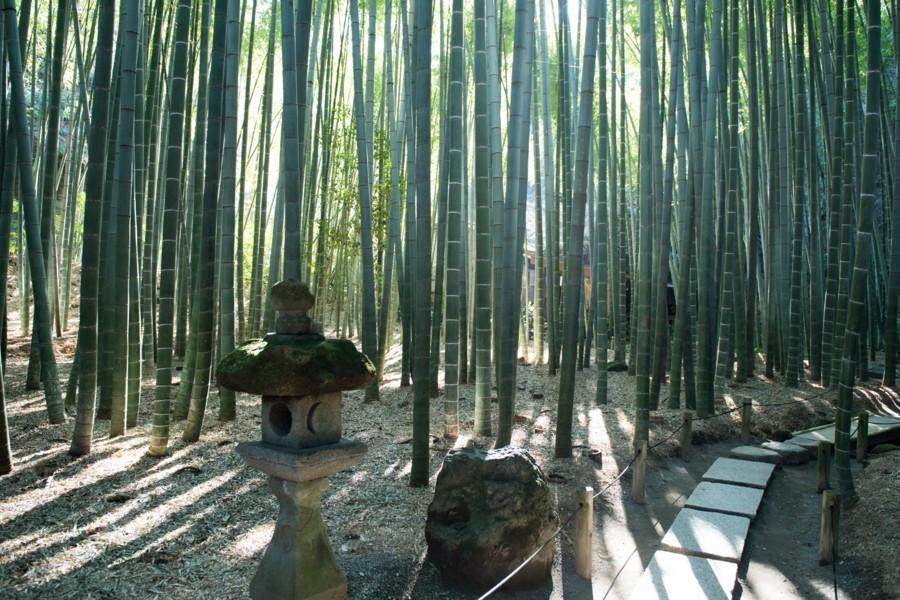 Meditieren Sie in Kamakuras ruhigem Bambushain
