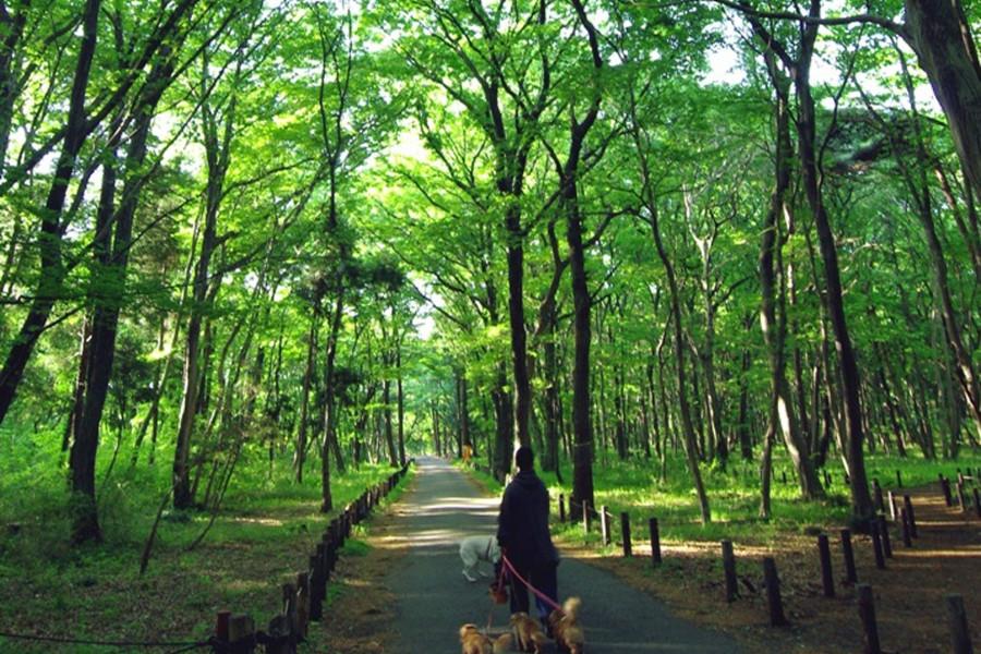 เส้นทางเดินชมธรรมชาติและศิลปะซากามิฮาระ