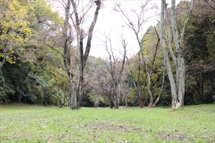 橫濱的森林遠足