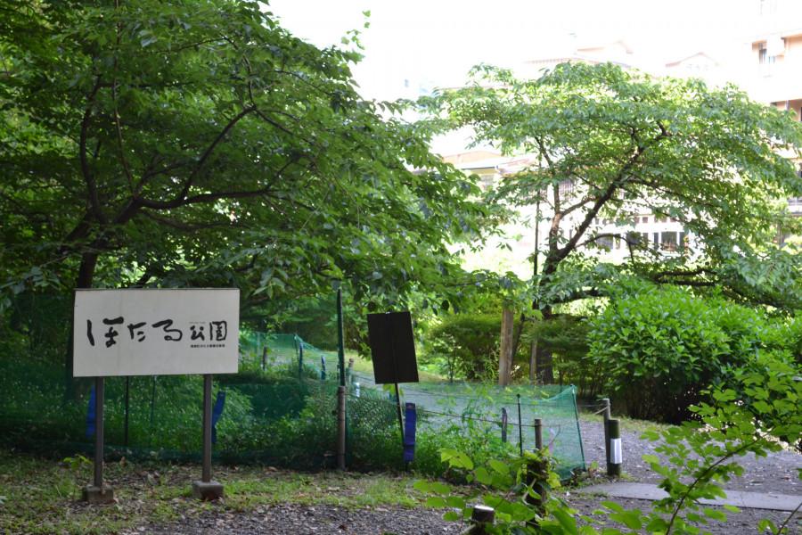 Summer Fireflies and Shopping in Hakone