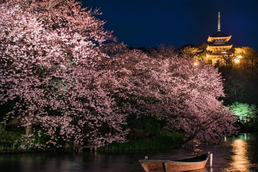Illuminierte Natur Yokohamas zu Lande und zu Wasser