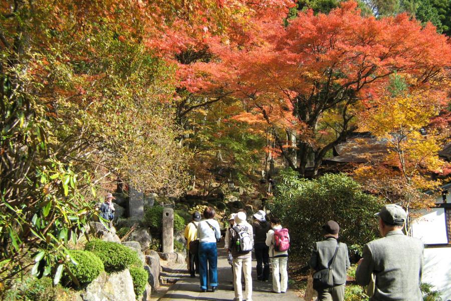 Scenic Autumn Days in Sengokuhara