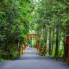 Lối Thoát Cho Việc Điều Trị ở Hakone