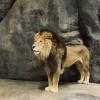 동물원과 수족관 모험