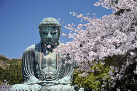 View of Kamakura's Great Buddha and cherry blossom