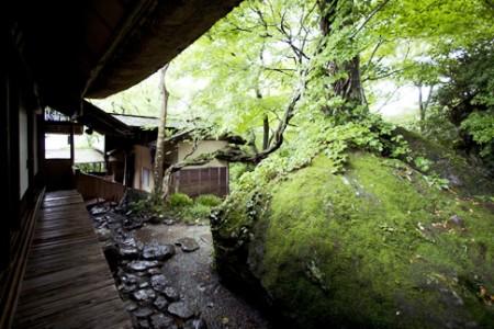 Haku-undo Tea Garden