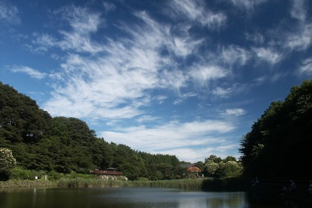 Appréciez la nature flamboyante de Kanagawa