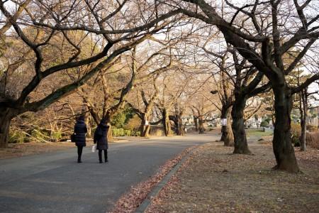 绿之丘灵园公园
