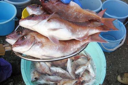 大矶 拖网钓鱼体验