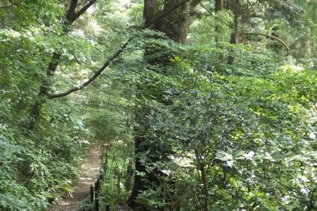 Manazuru nature trail