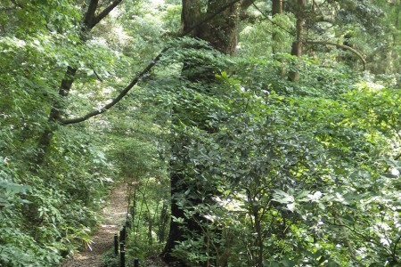 Le sentier nature Manazuru