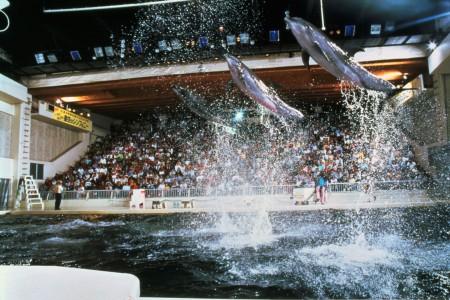 Le Parc marin Keikyu Aburatsubo