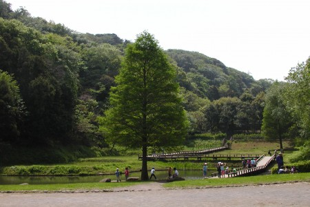Shinbayashi Park (Stroll/Bird-watching)