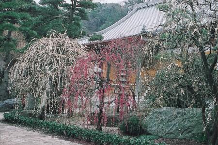 Joryu-ji