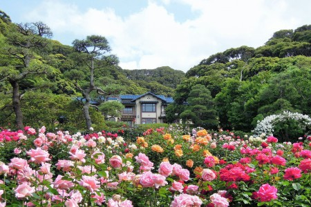 Autumn flower viewing in Kamakura by Enoden